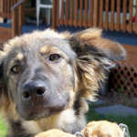 <del>Lost</del> Abandoned Dog West Kelowna