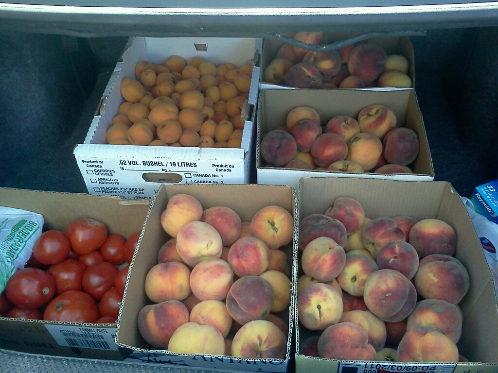 Trunk full of Peaches, Apricots and tomatoes.