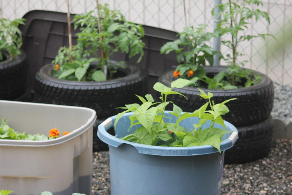 Veggie Garden with tomatoes, peppers, beans and marigolds.